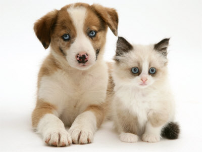 9-cosas-a-tener-en-cuenta-para-adoptar-una-mascota_hobl4
