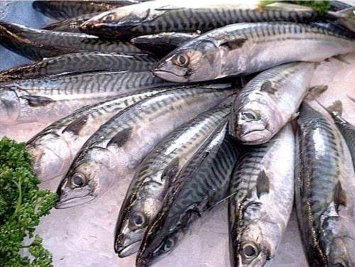 beneficios-que-tiene-comer-mariscos-y-pescados_59c71