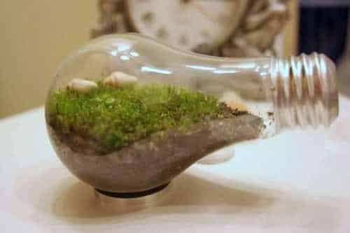 como-crear-un-mini-habitat-dentro-de-una-bombilla_ryjxg