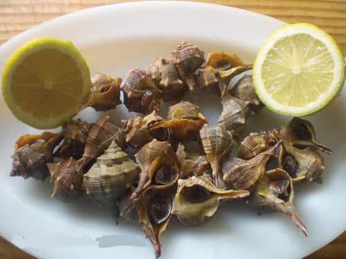como-preparar-los-caracoles-de-mar-o-canailla_69d03