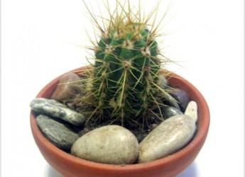 contra-la-radiacion-cactus_hdqa7