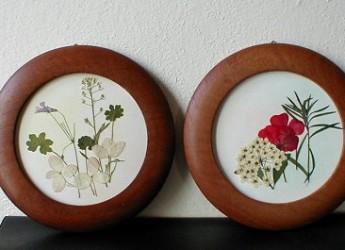 cuadro-hecho-con-flores-secas_k2er4