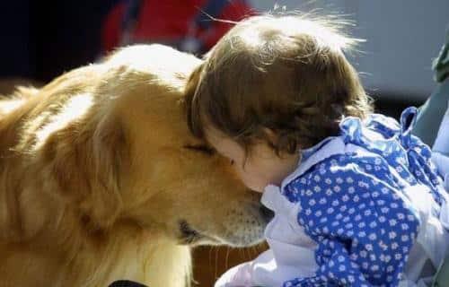 cuando-el-nino-quiere-una-mascota_1vzt4