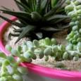 decorar-macetas-con-neon-una-idea-brillante_ie4y2