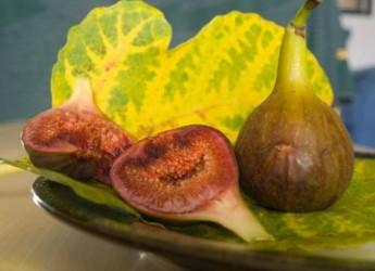 descubre-cuales-son-los-mejores-alimentos-para-nuestra-salud-parte-ii_6ljzs