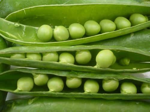 descubre-cuales-son-los-mejores-alimentos-para-nuestra-salud-parte-iii_tl42x