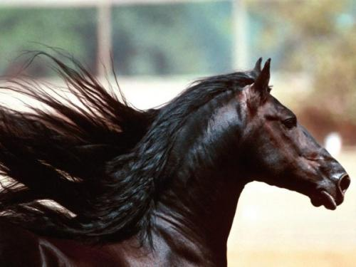 el-champu-de-caballo-son-todo-beneficios_f85u4