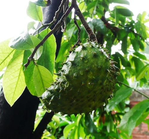 frutas-peruanas-para-una-larga-vida-parte-i_spize