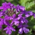 los-treinta-y-ocho-remedios-florales-para-combatir-diversas-enfermedades_l84km