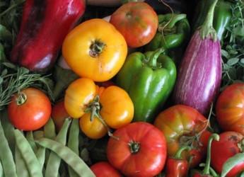 que-son-los-alimentos-organicos_heiv8