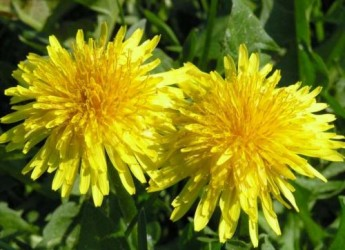 remedios-verdes-para-luchar-contra-el-colesterol-parte-i_ity7w