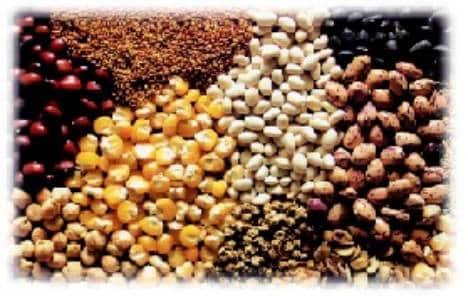 suplementos-naturales-para-mejorar-la-dieta_3mf9q