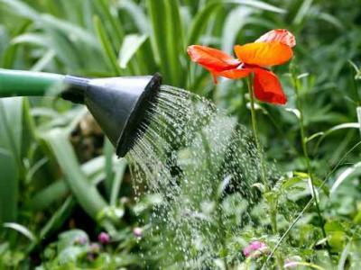 todo-lo-que-debes-saber-sobre-los-insecticidas-biologicos_sa79g
