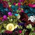 trucos-para-secar-las-flores_rzp9e