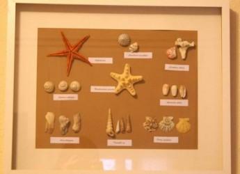 un-detalle-marino-en-nuestra-pared-un-cuadro-hecho-con-conchas-y-caracolas_5zeqn